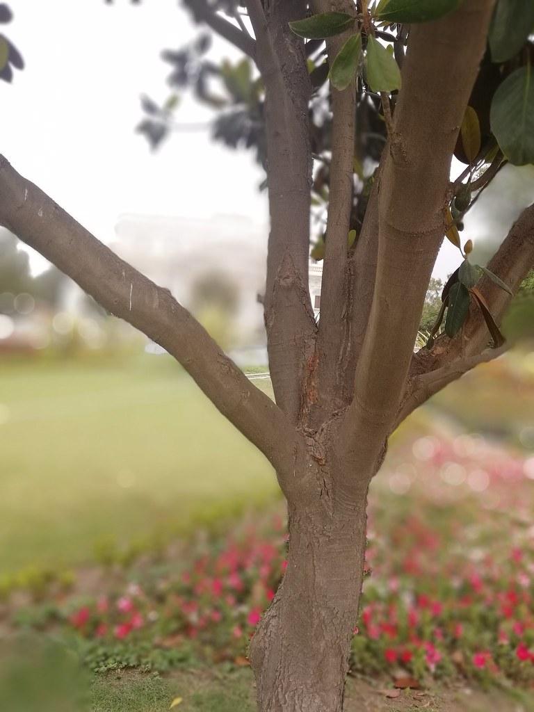 Plant Shot