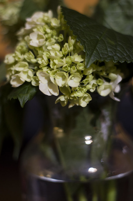 April 29 -  Tiny flowers