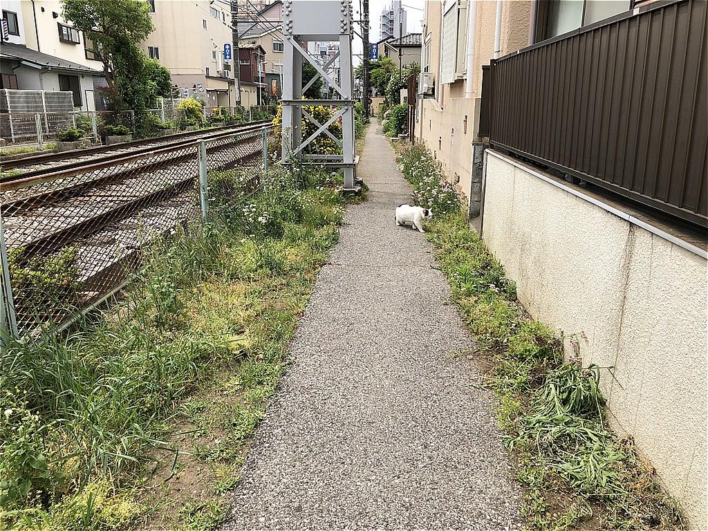 20180502_TokyoSakuraTram (41)