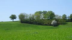 Donzy - Photo of Saint-Clément-les-Places