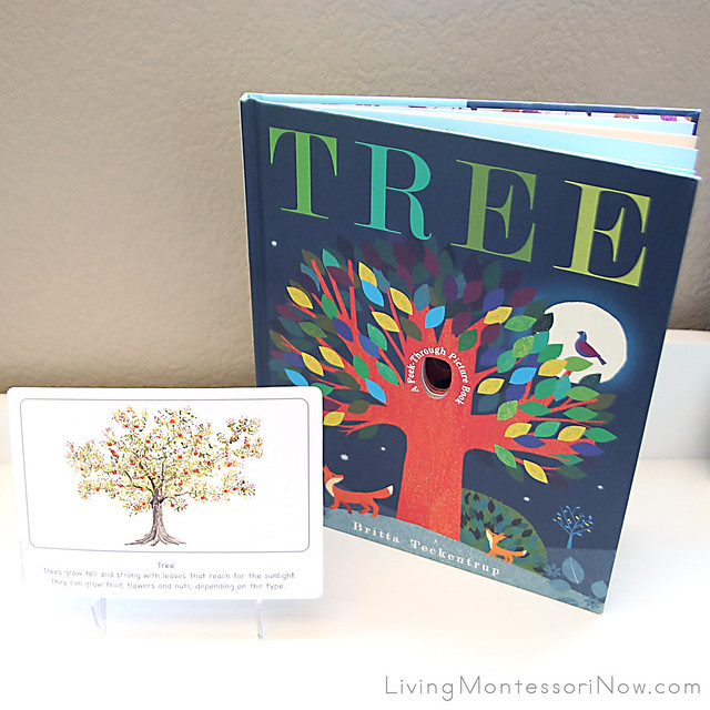 Tree Culture Card with Tree Book by Britta Teckentrup