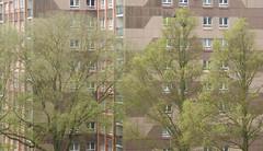 Spring Tree Growth