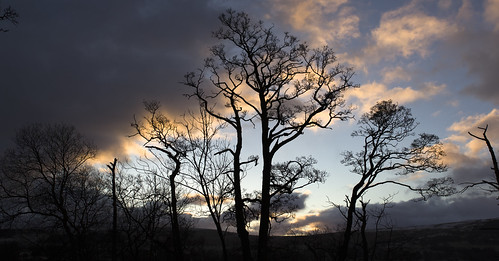 tree trees clouds cloud colour sun rise sunrise silhouette lakedistrict ullswater lakeullswater morning february 2018 panorama panoramic symmetry symmetrical