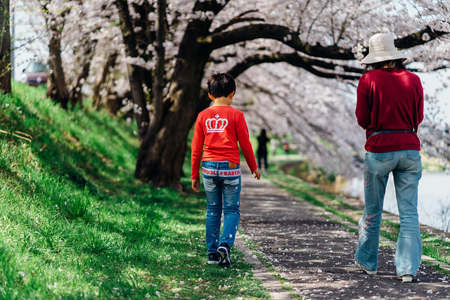 CherryBlossoms_83
