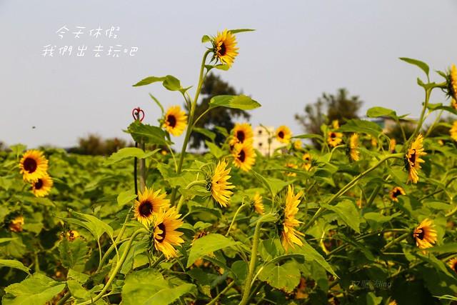 IMG_9982-16