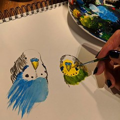 Evening learning sketches. Two silly birdies.