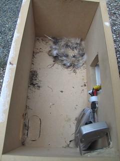 Gierzwaluwnestkast, 17 oktober 2010