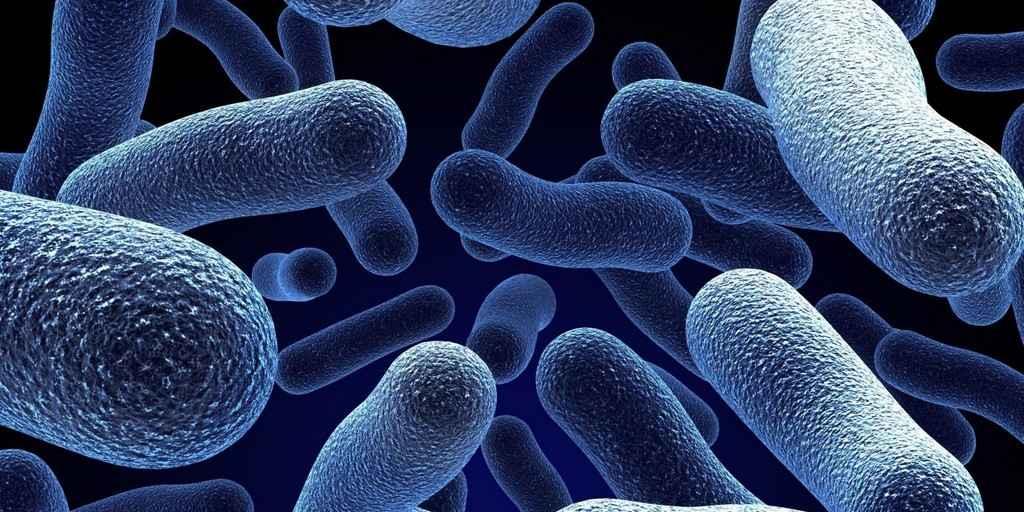 Les bactéries résistent non seulement aux antibiotiques mais les mangent également