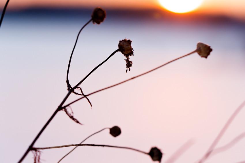 talvinen auringonlasku-3139