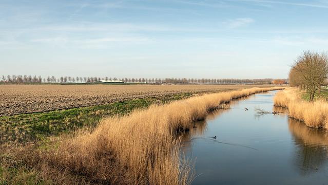 Dutch creek in the spring season - Kreek in het voorjaar