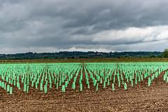 01-Jeunes plans de vigne - Photo of Landiras