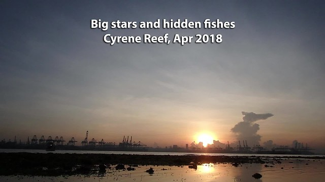 Big stars and hidden fishes on Cyrene Reef