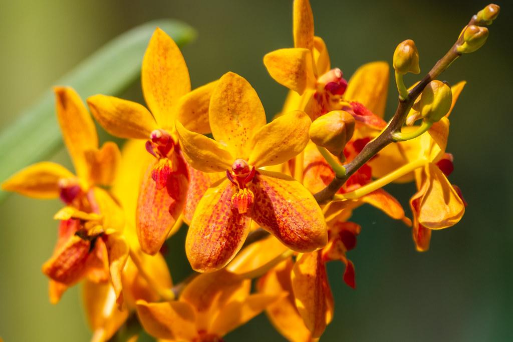 Записки юного натуралиста. Жаркий субботний день в Hort Park. всего, жарко, кустах, много, воробью, названием, известные, Ternatea, Clitoria, цветы, Синющие, орхидей, ярких, прыгскок, равно, Vented, Bulbul, видел, Yellow, Молодой