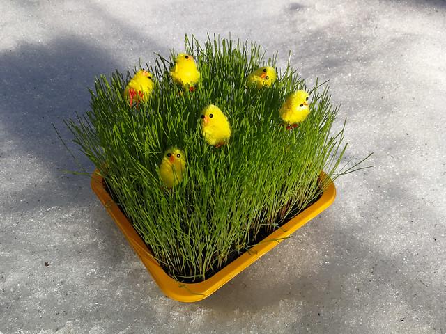 Pääsiäisen juhlintaa hangella. Valokuvaaja: Markus Kauppinen