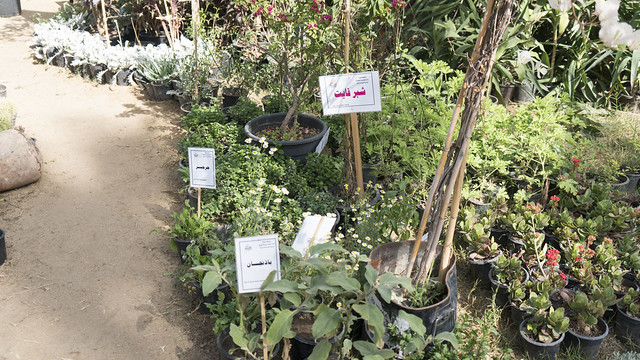 Vegetables at Egypt's Spring Flowers Fair 2018