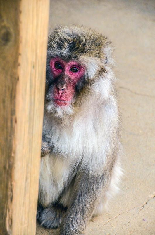 Monkey post