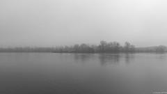 Le Rhin sous la brume - navigation rhénane