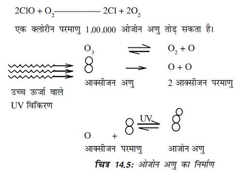 चित्र 14.5 ओजोन अणु का निर्माण