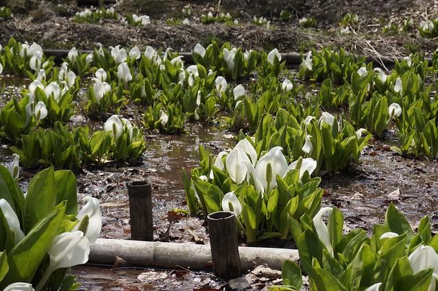 Komatsu Recreation Forest