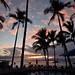 Palm tree sunset por kerry richardson