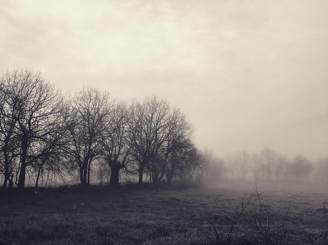 A mysterious winter's landscape