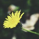 20180504-180856 - Flower Bokeh