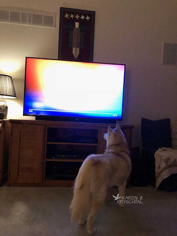 IMG_0570MaggieTV2