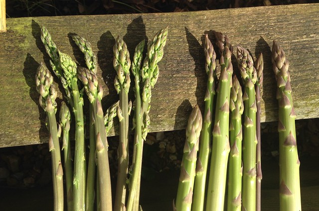 celebrate spring: Asparagus (right) and wild asparagus