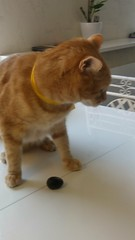 Le chat qui couvait un oeuf-1