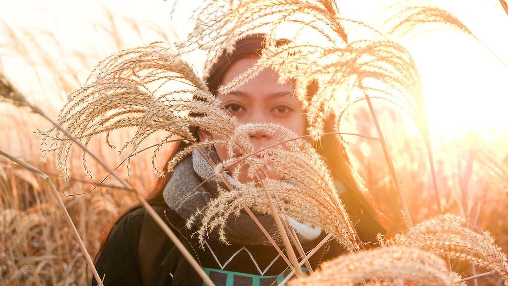 silvergrass_closeup