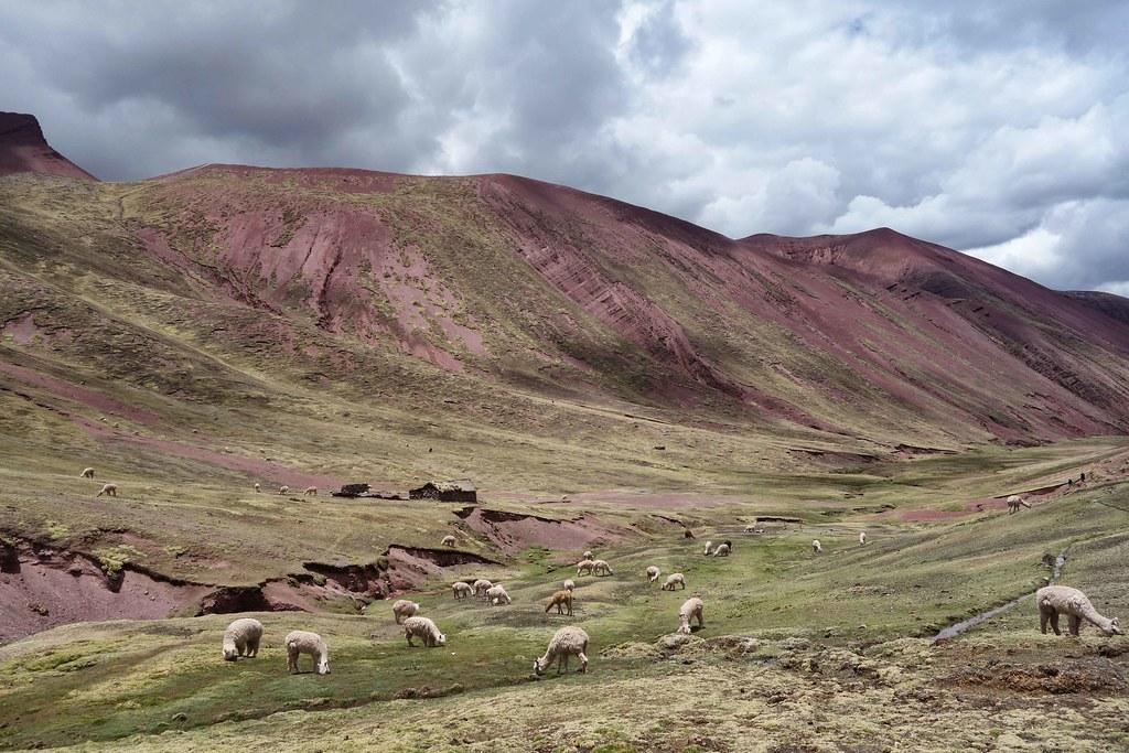 Cuzco - Vallee Rouge - Lamas 6