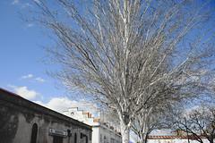 Sunny Saturday walks in Lisbon's East side #lisbon #street #t3mujinpack