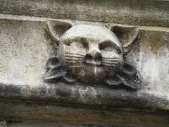 Feline face