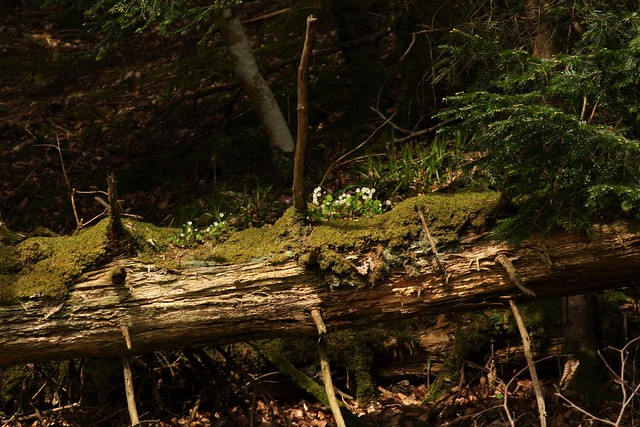 Union Wood