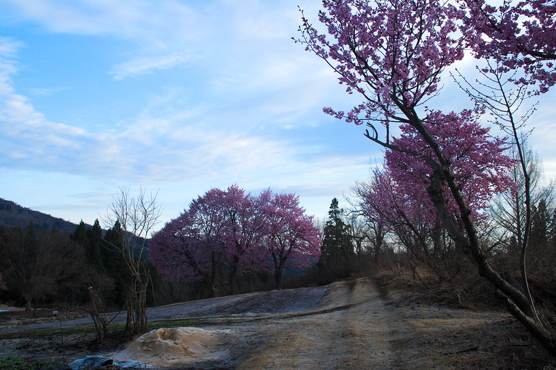 桜のある風景 #6_201804_NO2