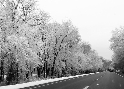 snow blackandwhite monochrome snowscape winter scenery delmarva nature wintertime trees blackandwhitephotos scenicdelmarva winterscenery treebranches treeart landscape delmarvapeninsula wicomicocountymd maryland easternshore salisburymaryland route50 treescape wicomicocounty esmd march2018