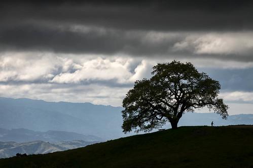 california henrycoe henrycoestatepark henrywcoestatepark santaclaracounty santacruzmountains usa unitedstates cloud landscape outdoor park silhouette sky statepark tree spring