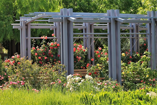 The Rose Garden, Canon EOS REBEL T3, Canon EF 70-300mm f/4-5.6 IS USM
