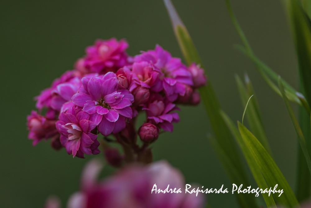 Fiori Piccoli.Piccoli Fiori Rosa Primaverili Many Thanks For Your Visit Flickr