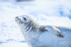 Antarctica-111124-972