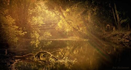 sun sunset intothesun lake beauty naturalbeauty inspirational naturesbeauty lightrays trees water