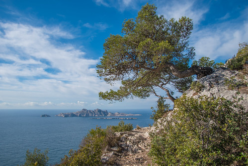 landscape sea seascape sky bluesky mediterraneansea island pineappletree green calanques marseille
