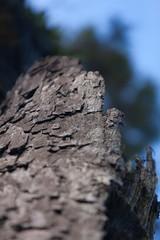 Rata Tree Detailed
