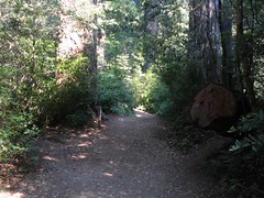 Lady Bird Johnson Grove, Redwoods National Park, California