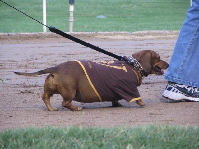 Weiner Dogs For Sale Omaha Ne
