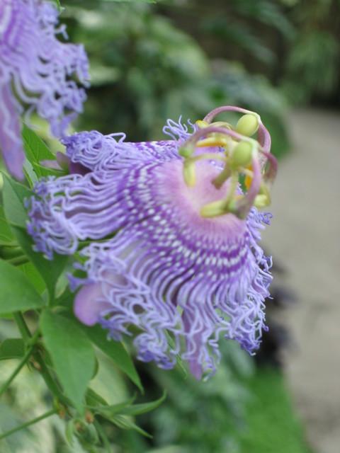 Purple Weird Looking Flower Flickr Photo Sharing