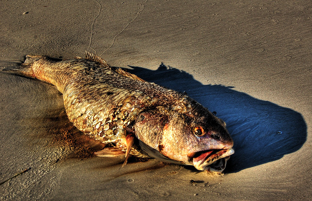 Scary Dead Fish - a gallery on Flickr