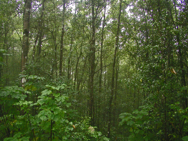 2005 1123ap Jpg Warm Temperate Evergreen Hardwood Forest