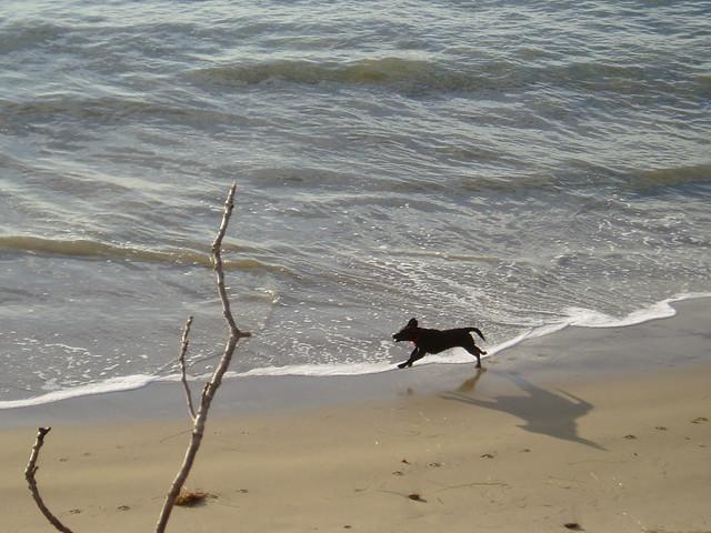 Little dog, big shadow.