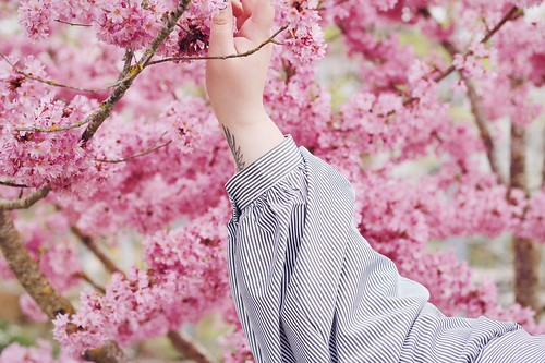 Blossom - Big or not to big (1)